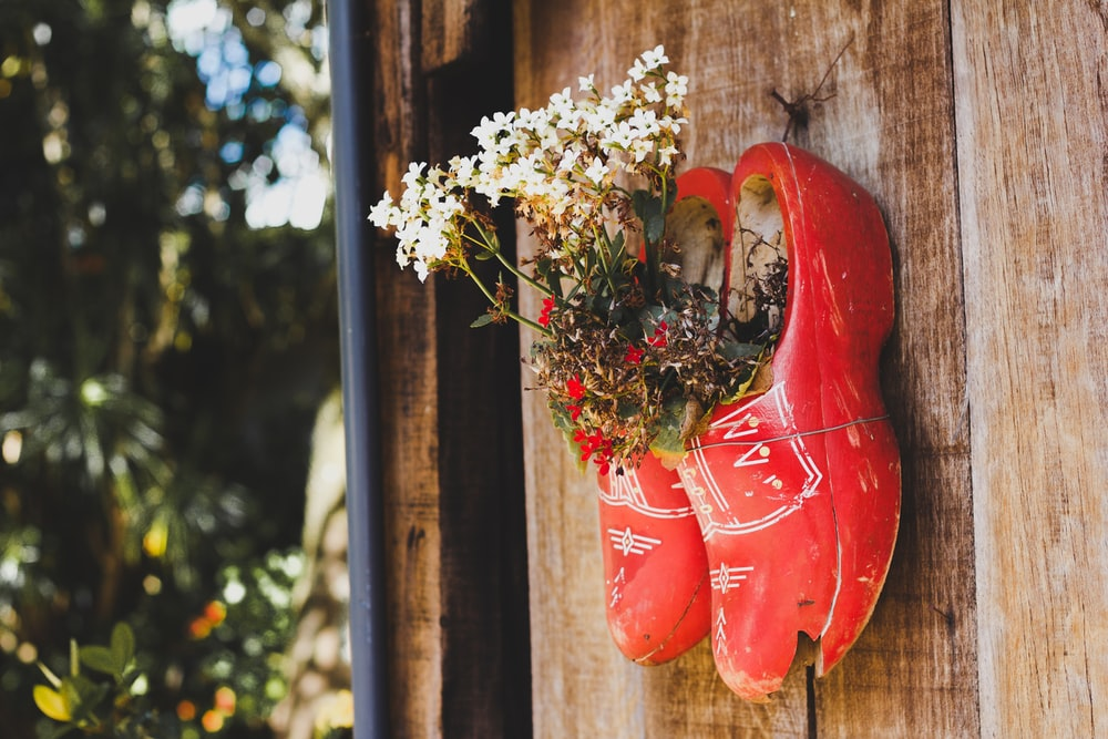 white petaled flower in red clog