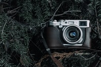 black and gray film camera with black case on green pine tree leaves