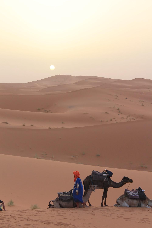 person standing beside camel on desert during daytime