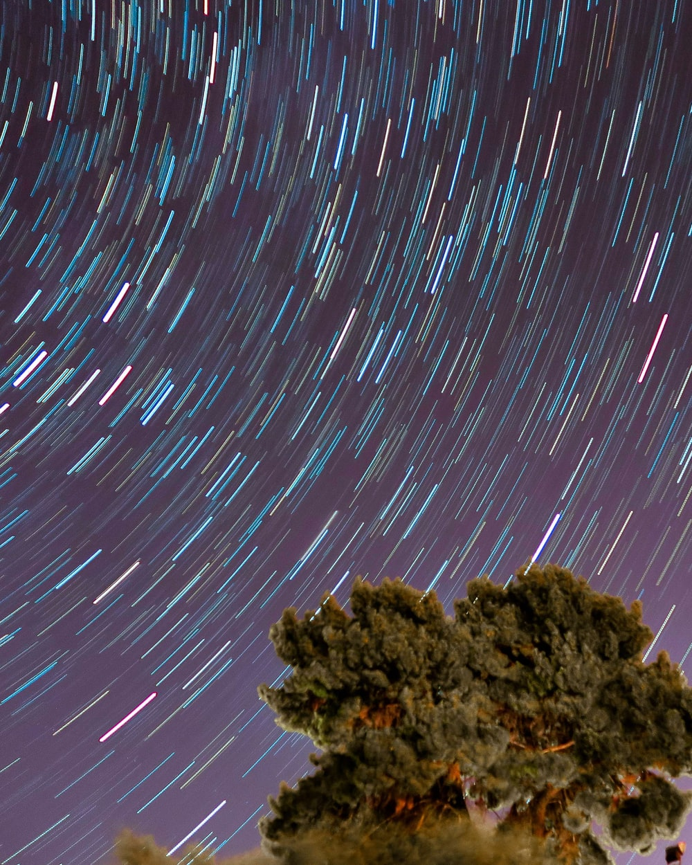 time-lapsed photography of tree under starry night