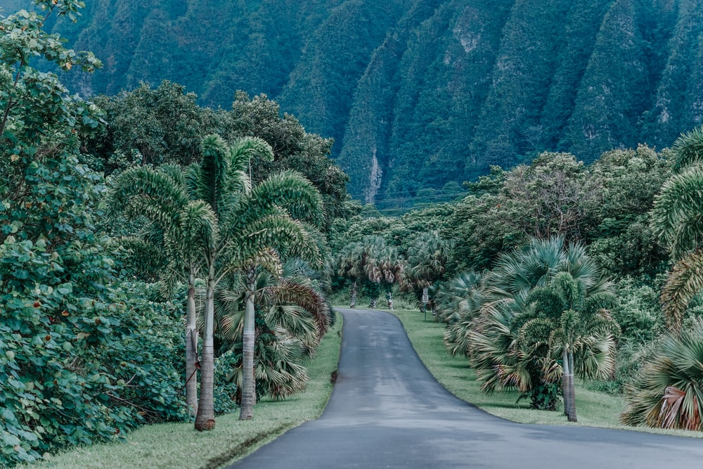 asphalt road between trees near mountain during daytime