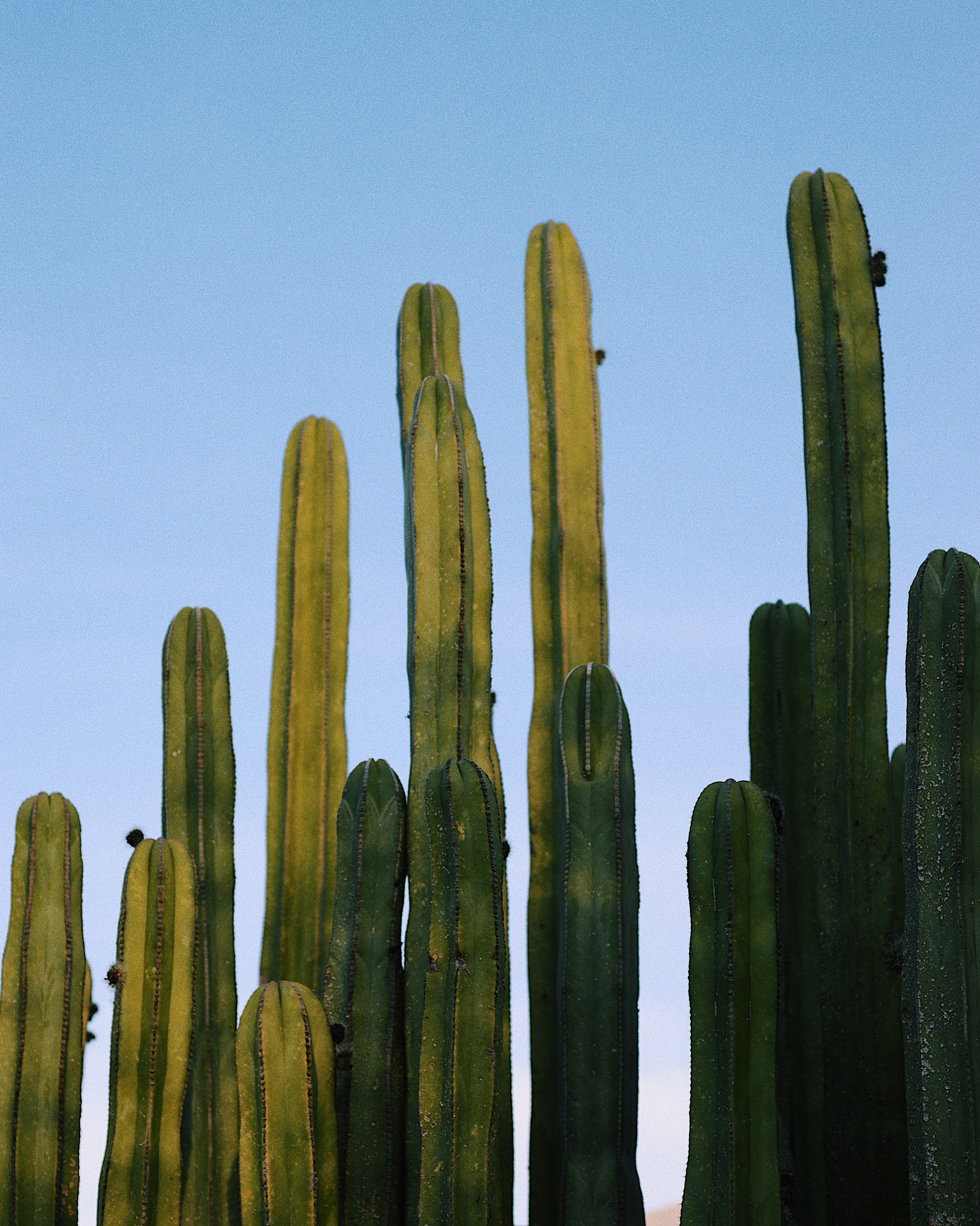 green cactus under blue sky at daytime