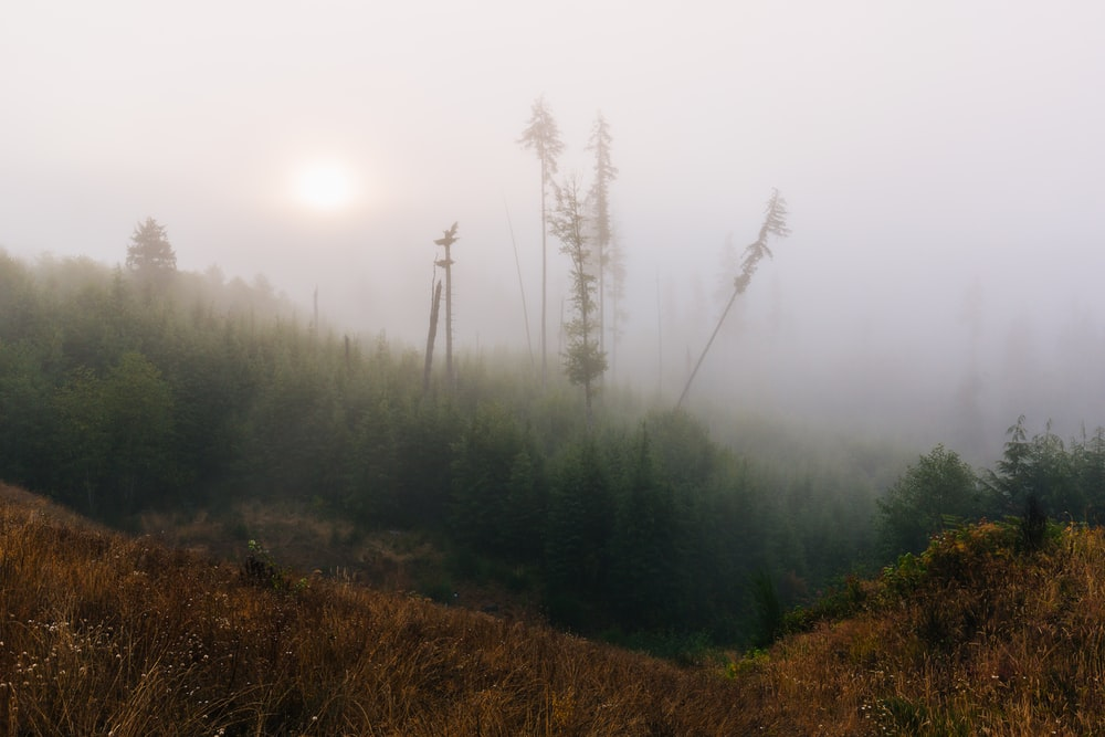 green trees covered with fog at daytime