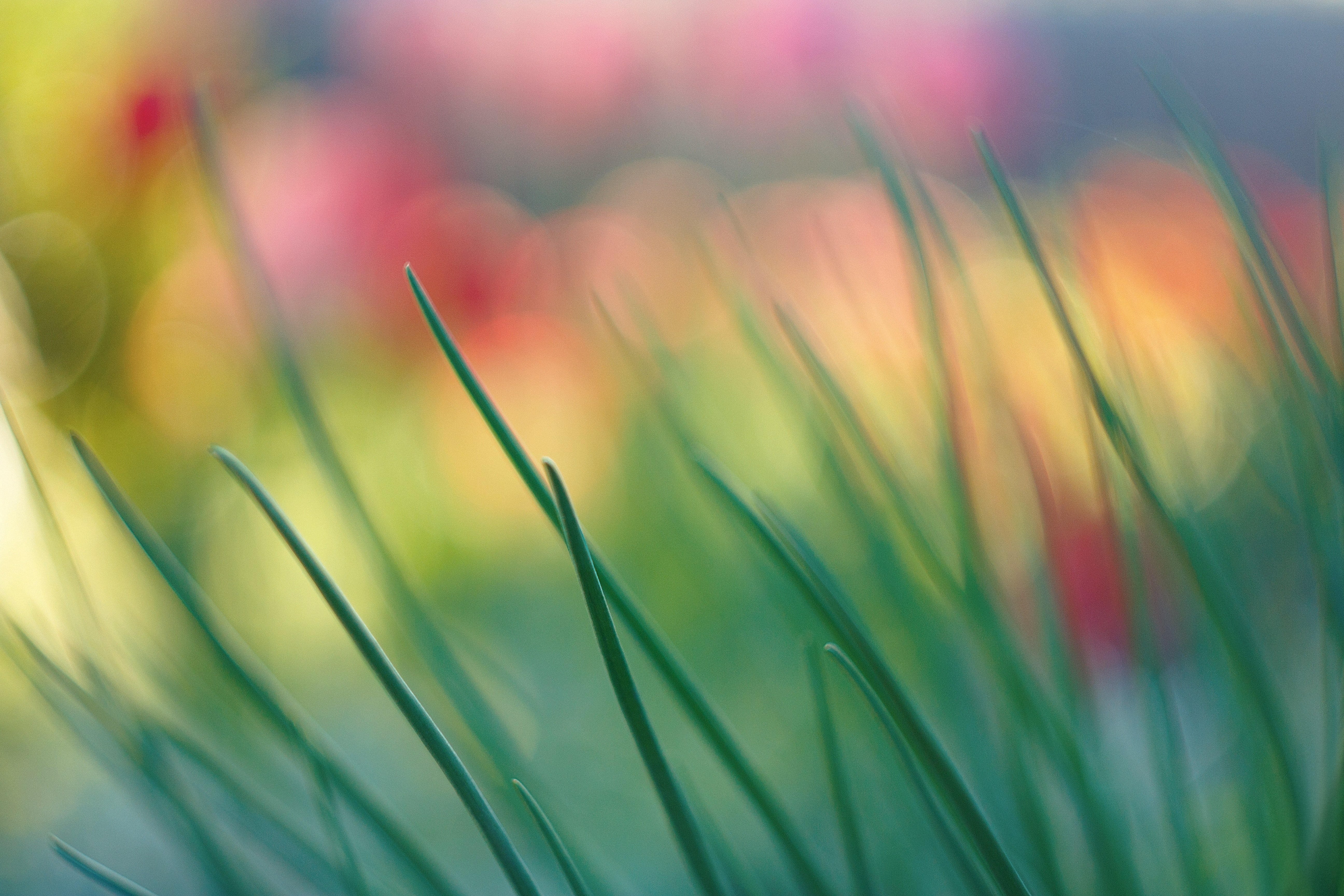 shallow focus photography of green grass