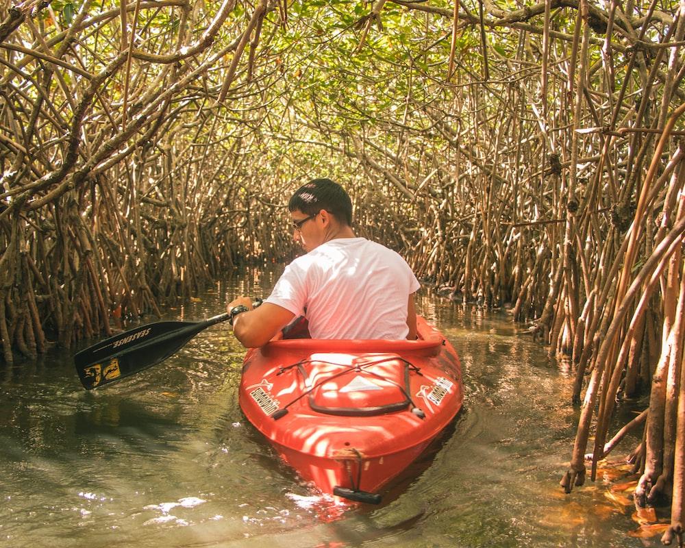 man rowing kayak through mangrove trees