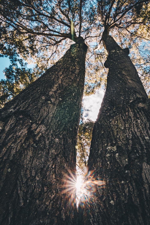 low angle photo of tree