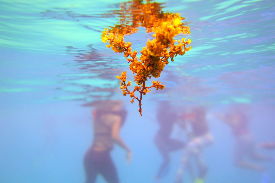 While leading a snorkelling class for a marine facility in Jamaica there were small clusters of sargassum, a type of algae that often times creates a huge problem for coastal areas, came close to the young snorkellers.  It was good to use this as a focal point with the students in the background, slight change in contrast and saturation of the original picture but the reflection of the water is natural.