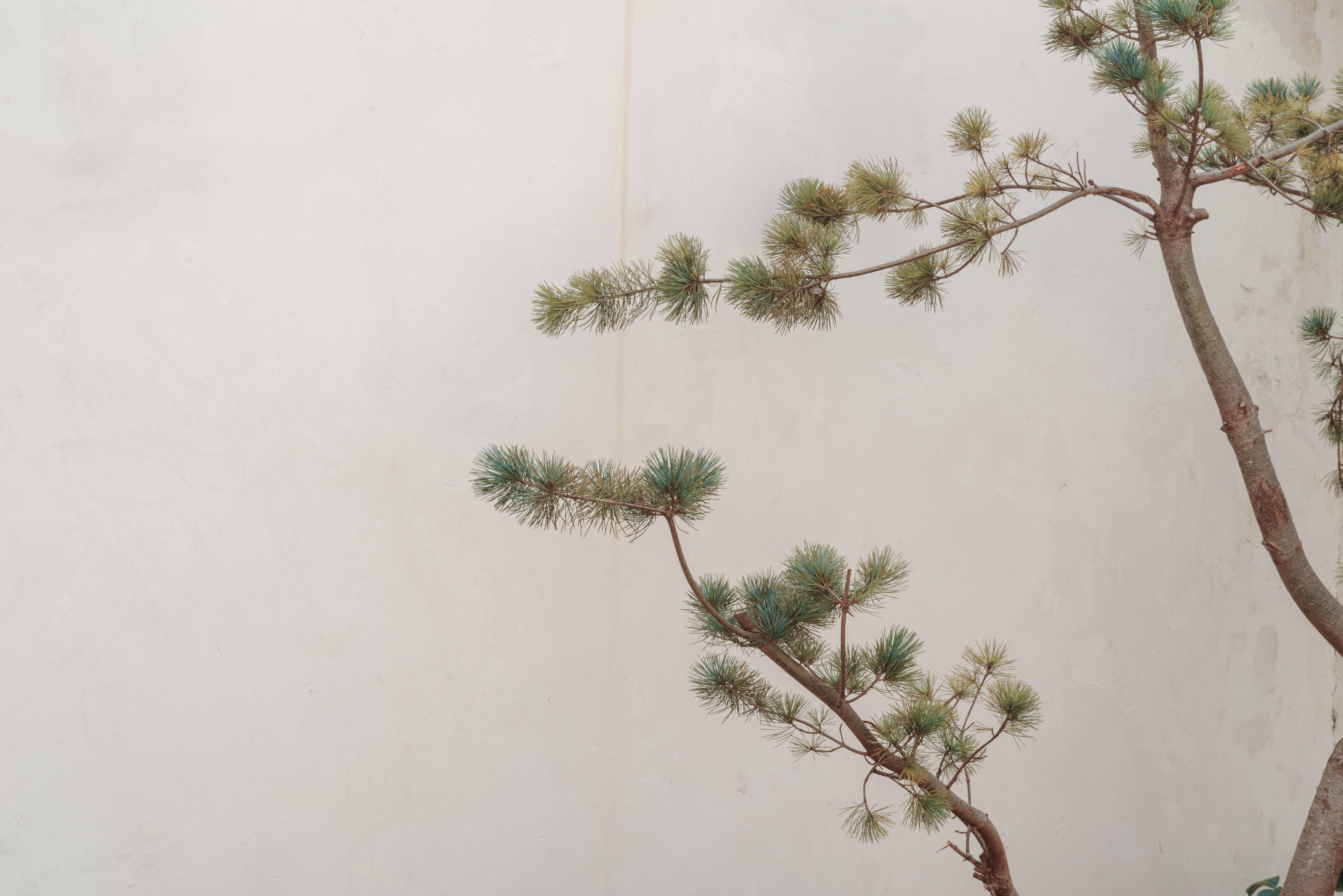 green tree beside white wall