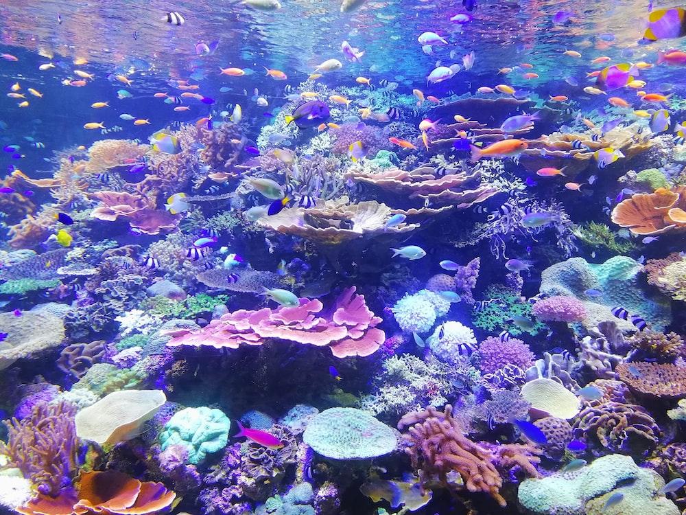 school of fish on corals