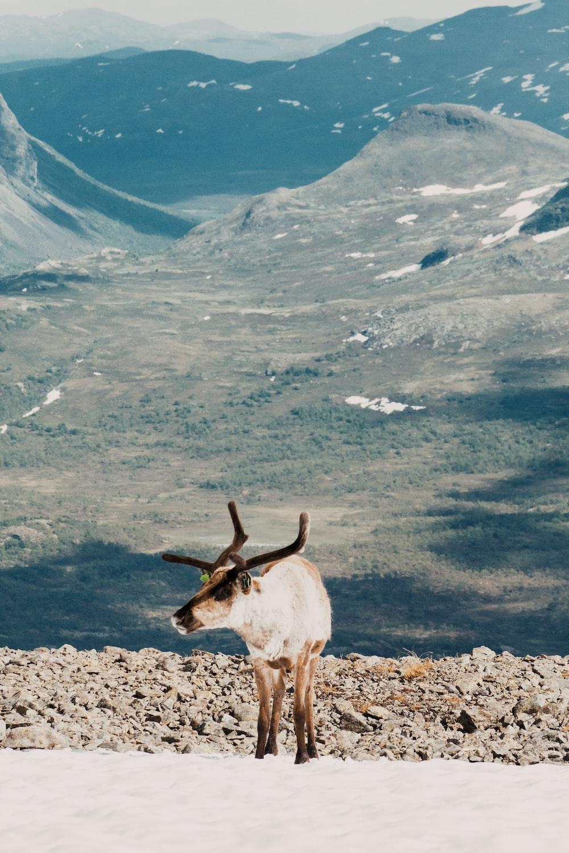 brown deer standing on ground
