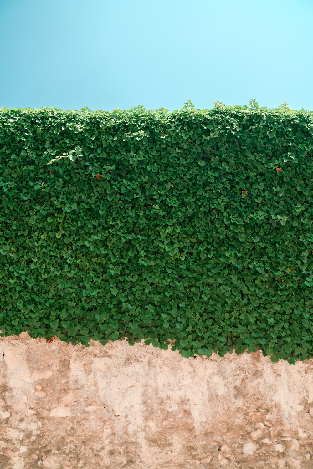 green leafed plant wall