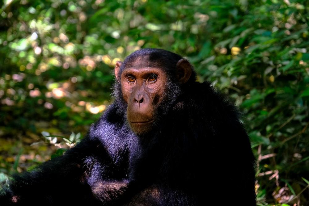 primate sitting on grass