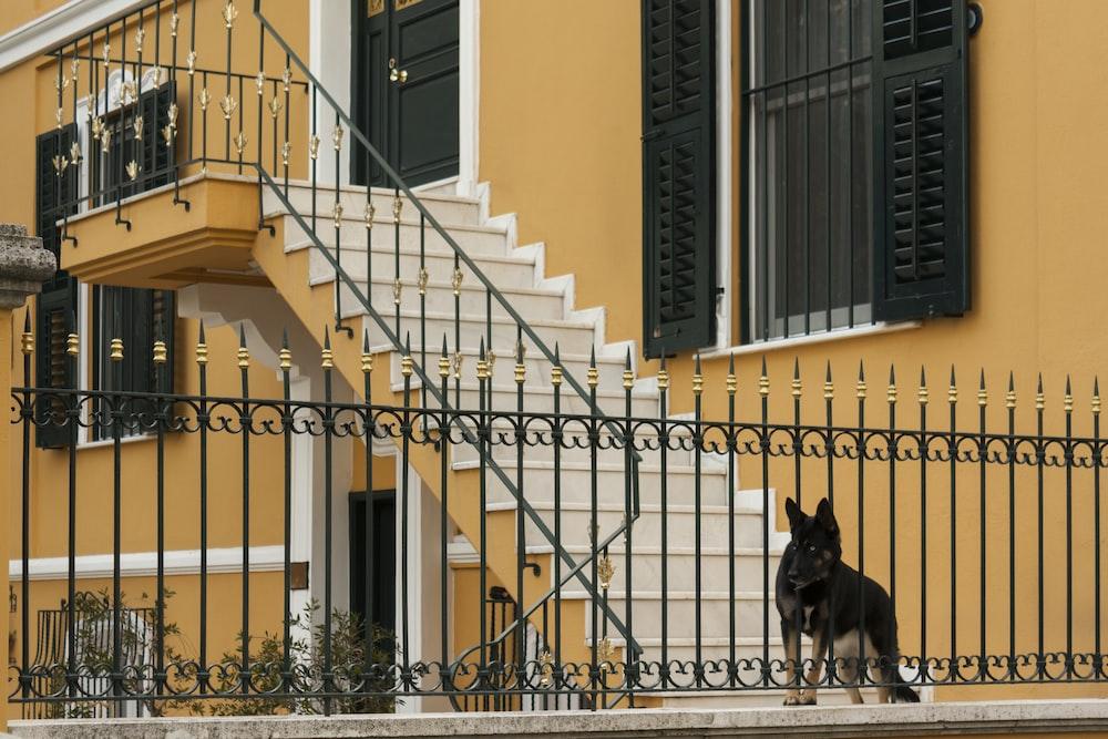 black and tan German shepherd dog near metal fence