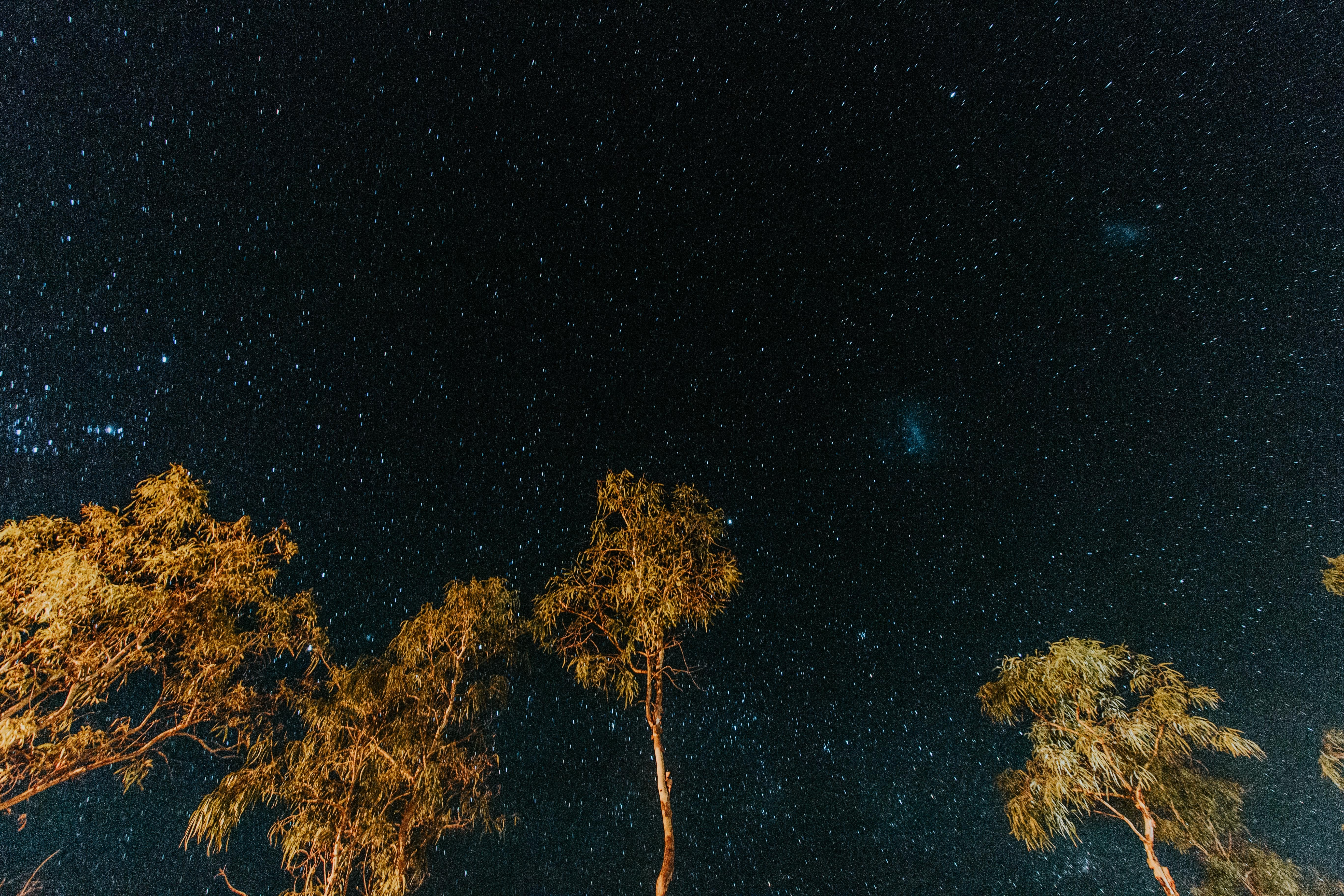 worm's eye view photography of starry night sky