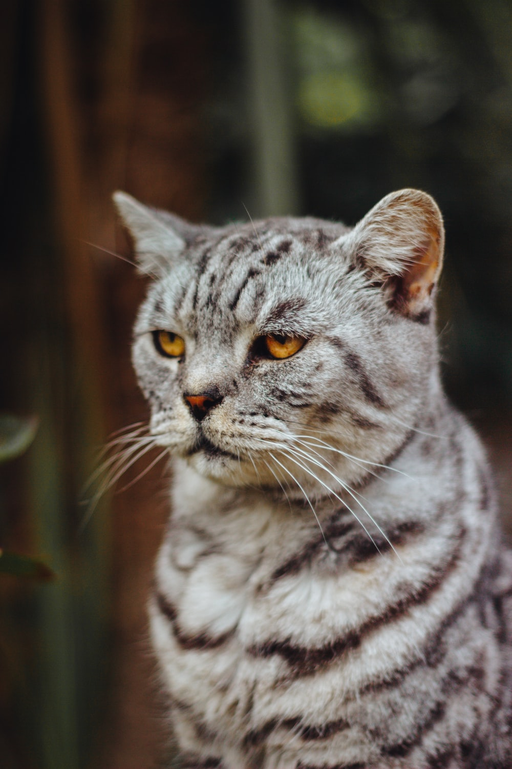 20 cat pictures images hd download free photos on unsplash