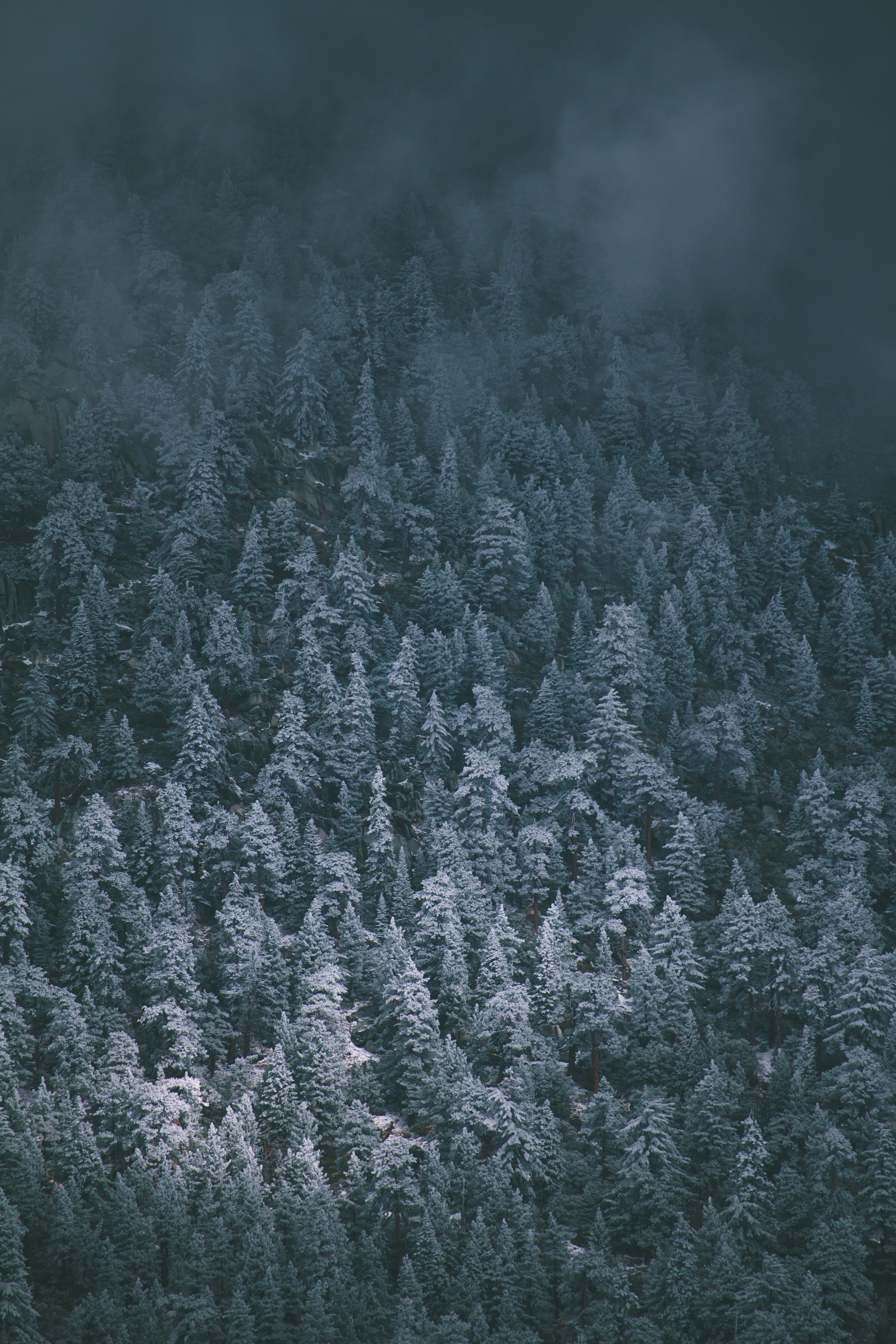 bird's eye view of trees covered by fogs