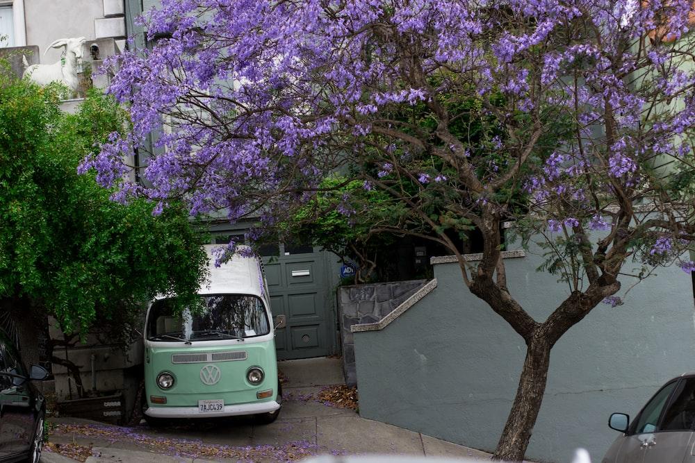 van parking near plants