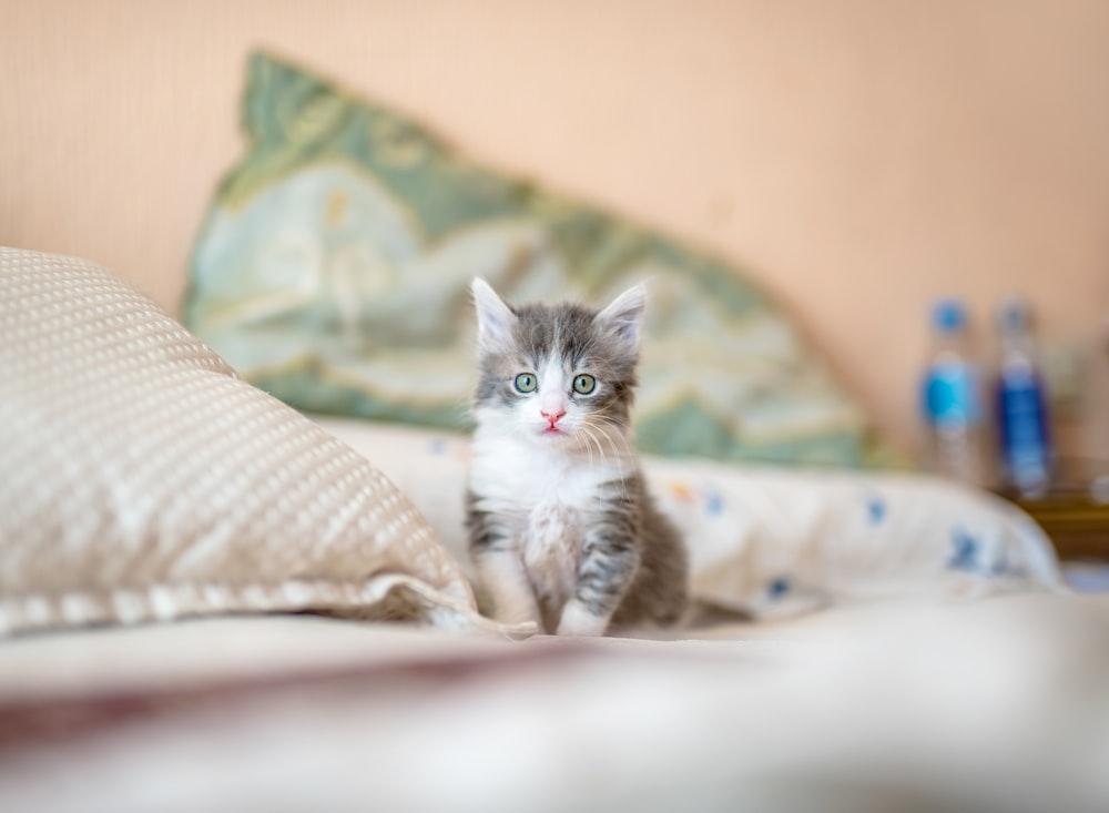white and gray kitten on white textile