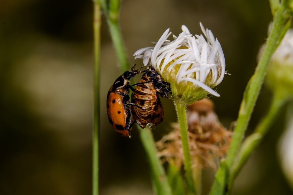 brown and black beetle on white flower