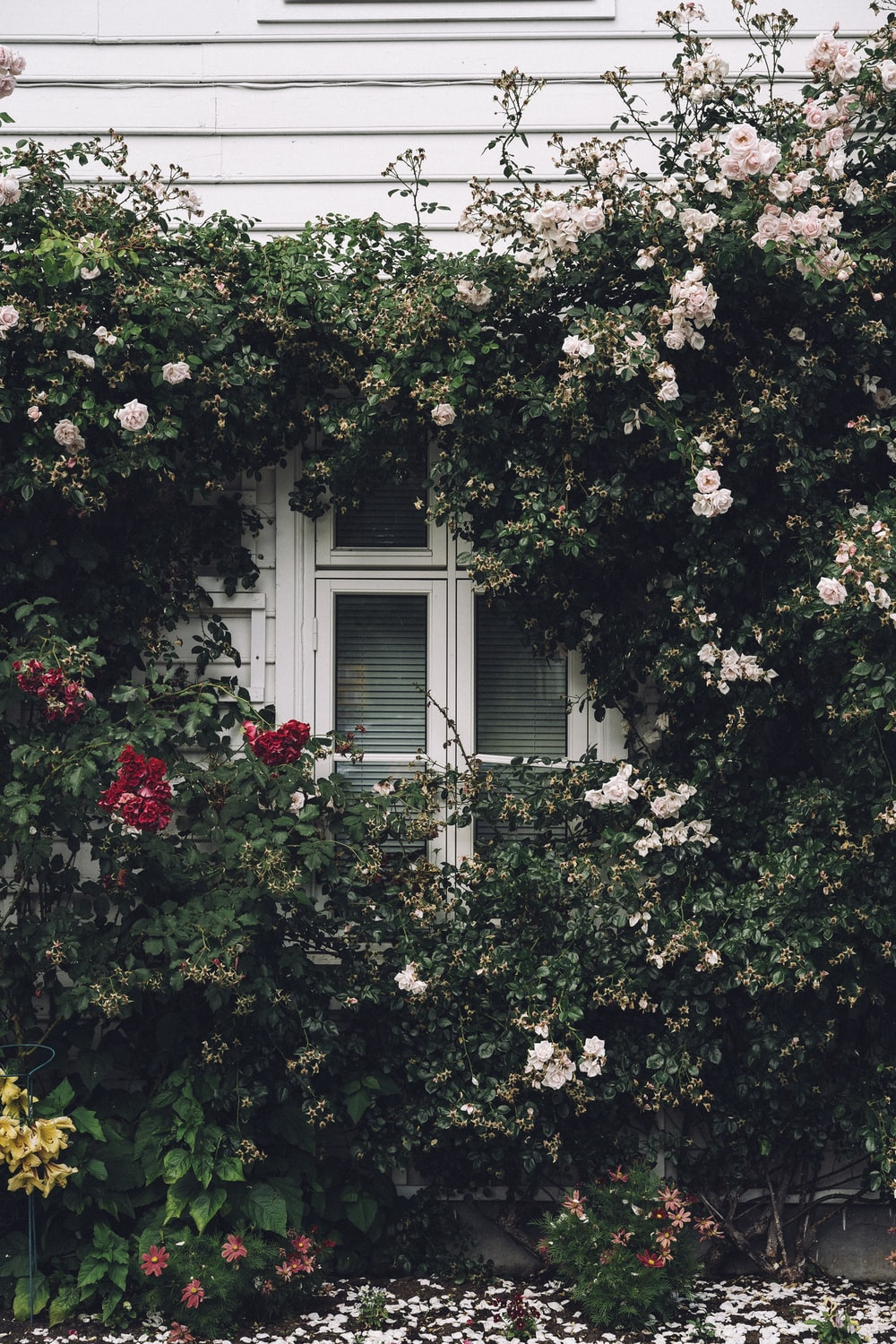 white painted wooden house filled with flowers