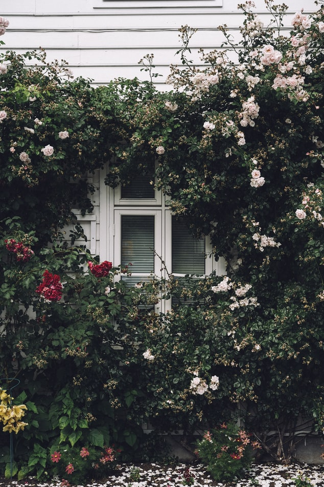 Rose Gardens | Flower Gardening For Beginners: A Guide To Growing Your Dream Garden