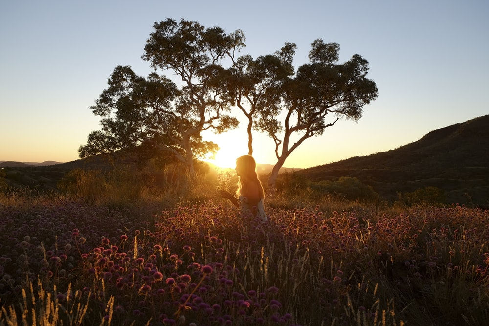 woman standing on flowers field near tree at golden hour