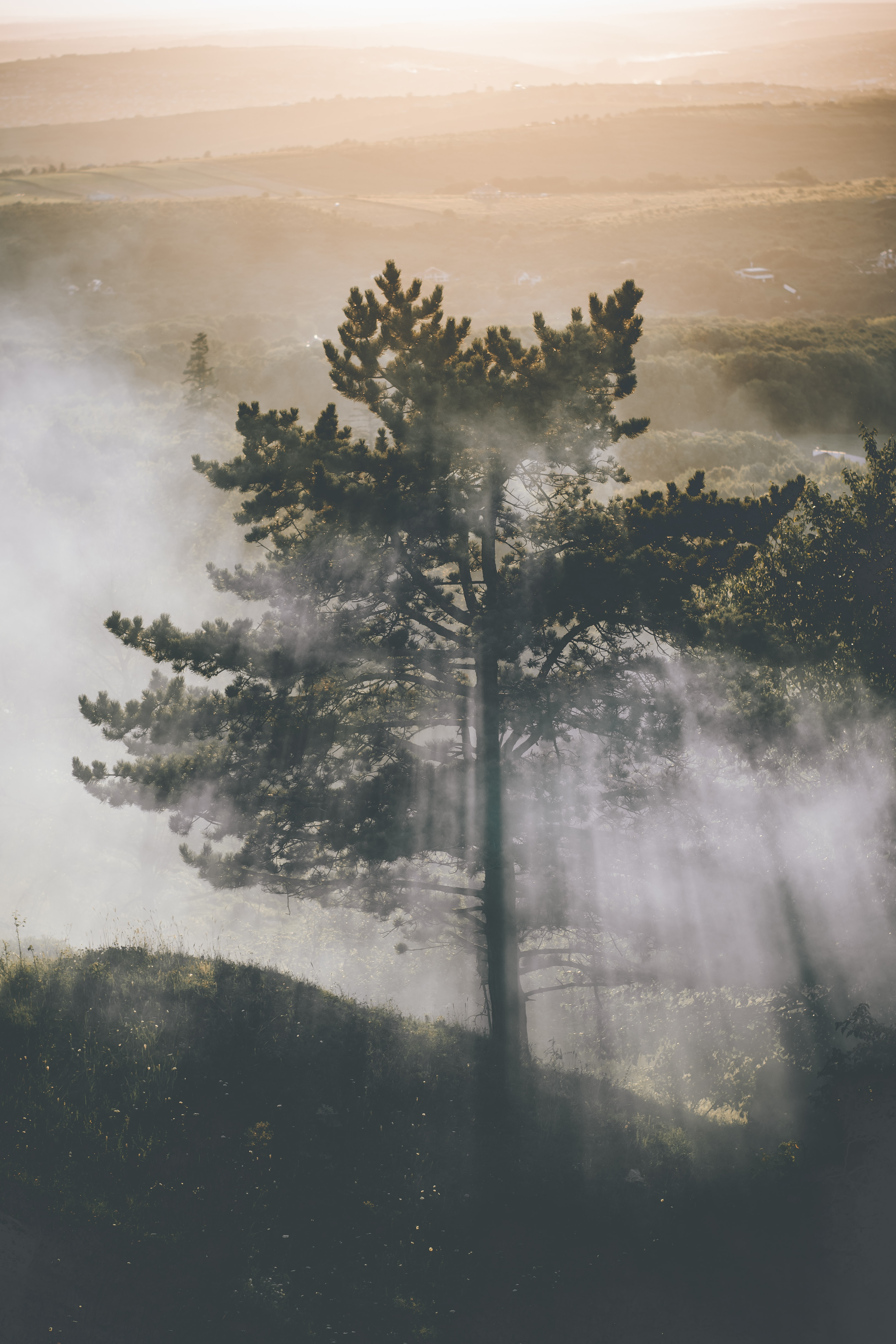 long exposure photography of tree with fog