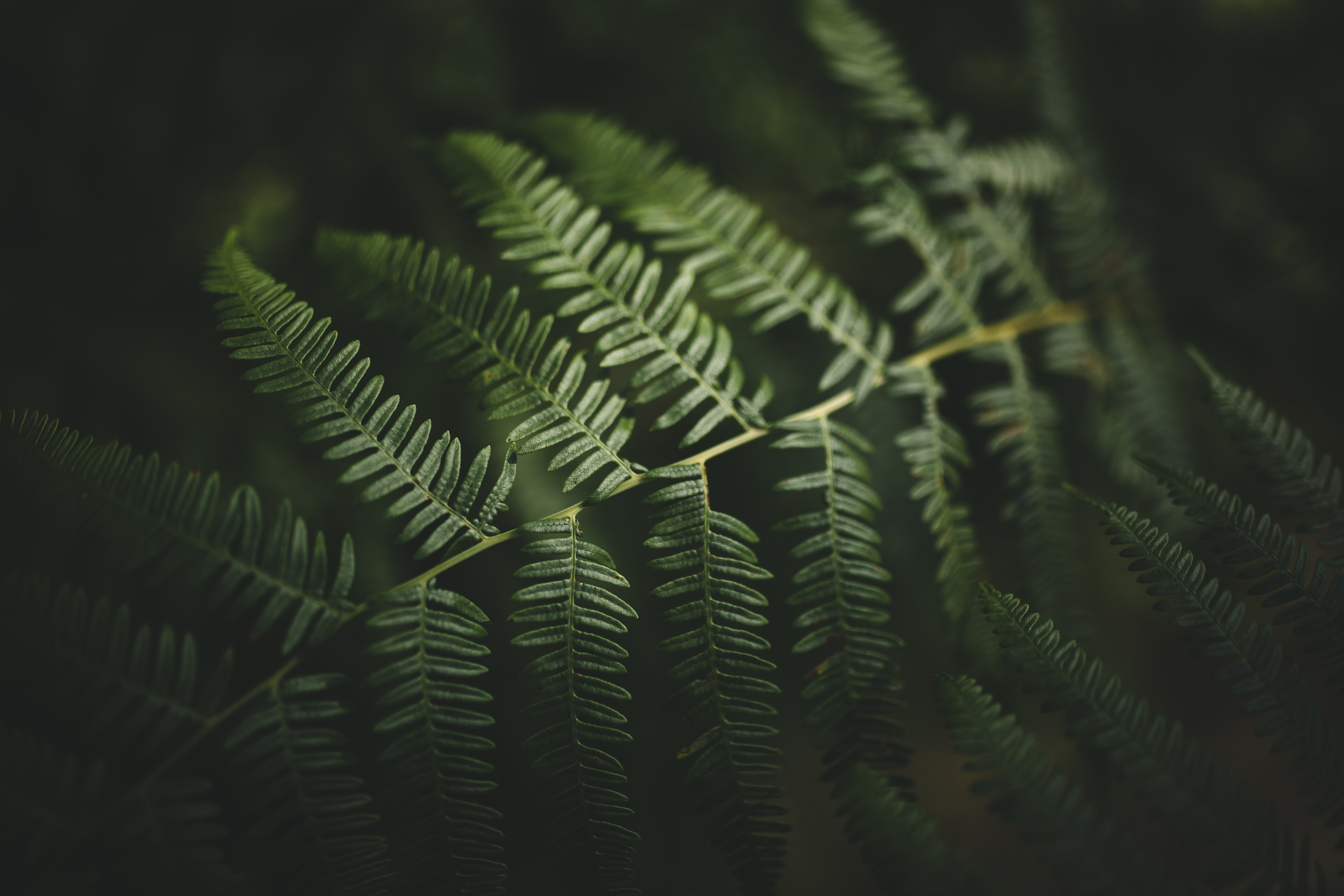 green fern plant surrounded by darkness