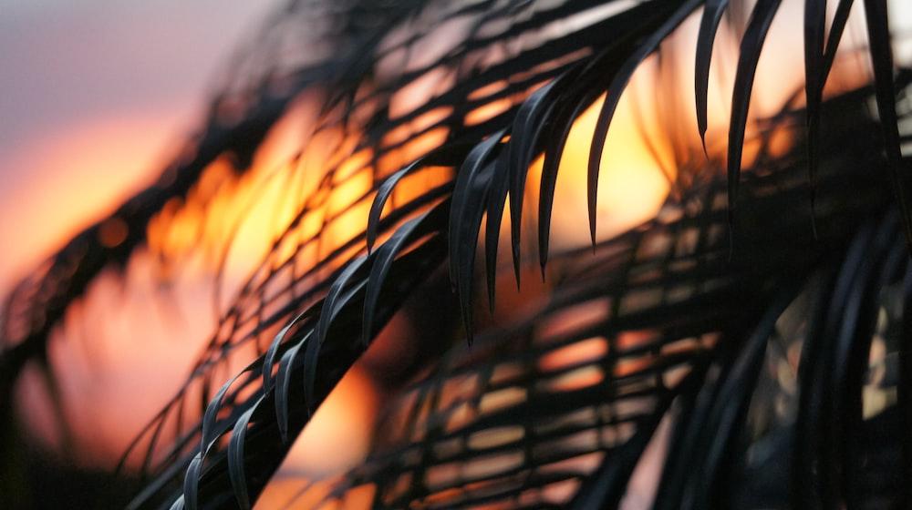 palm trees under golden hour