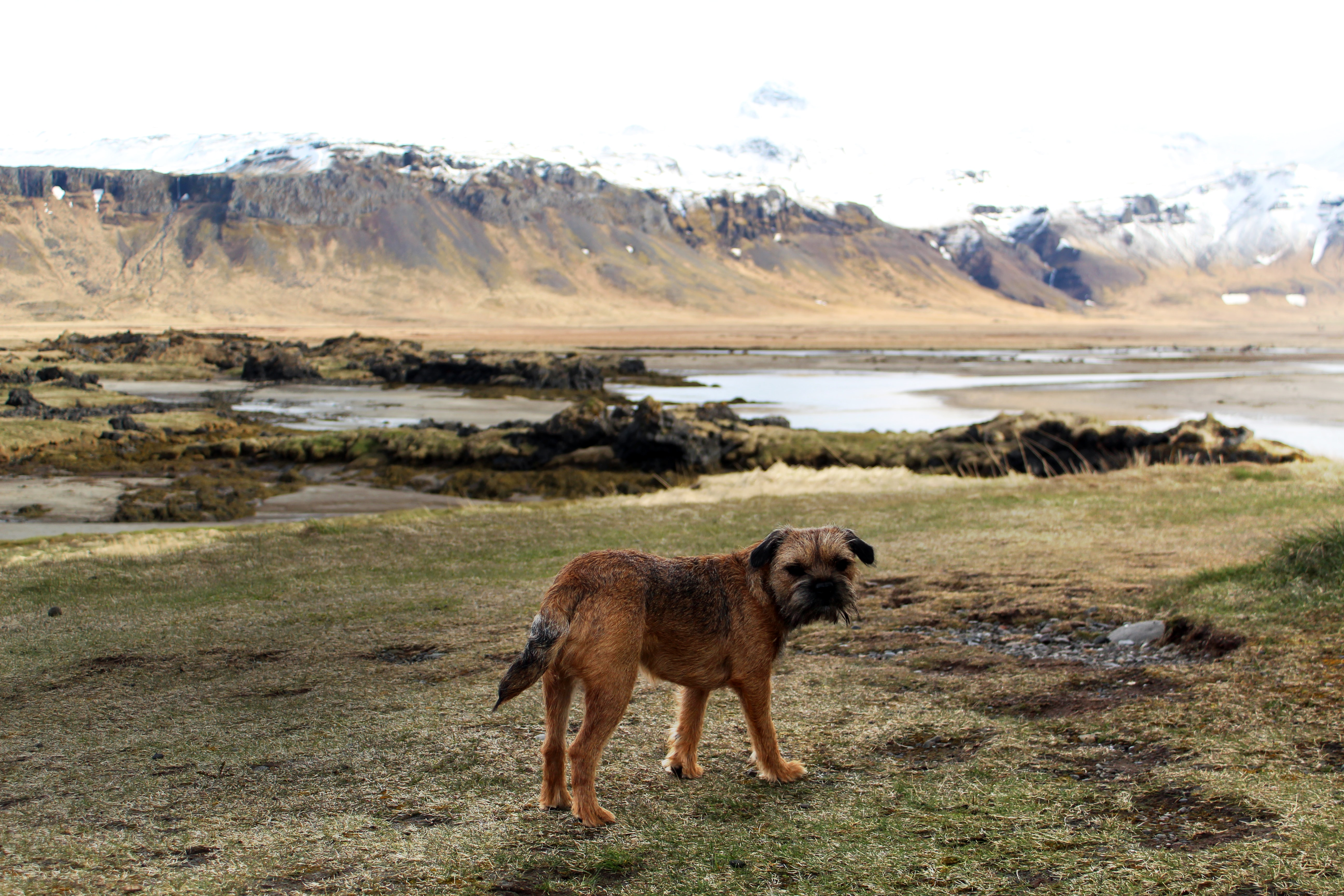 short-coated brown dog outdoors