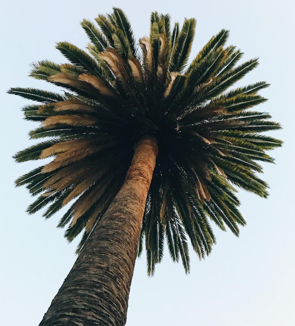worm eye photography of palm tree