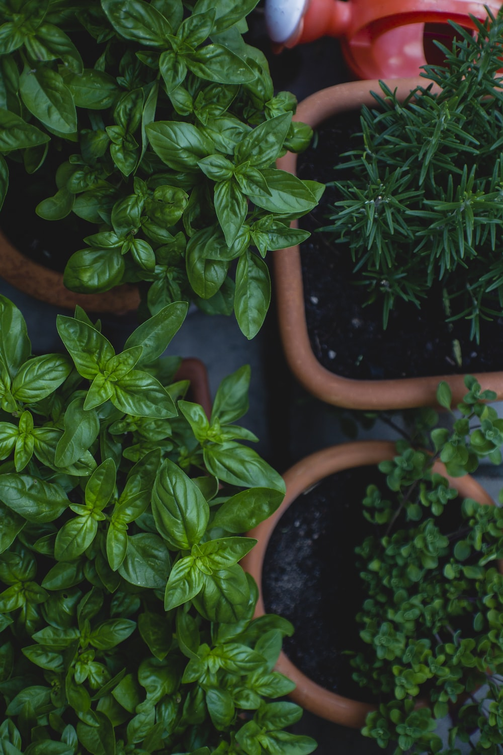 top view photo of green leafed plants in pots