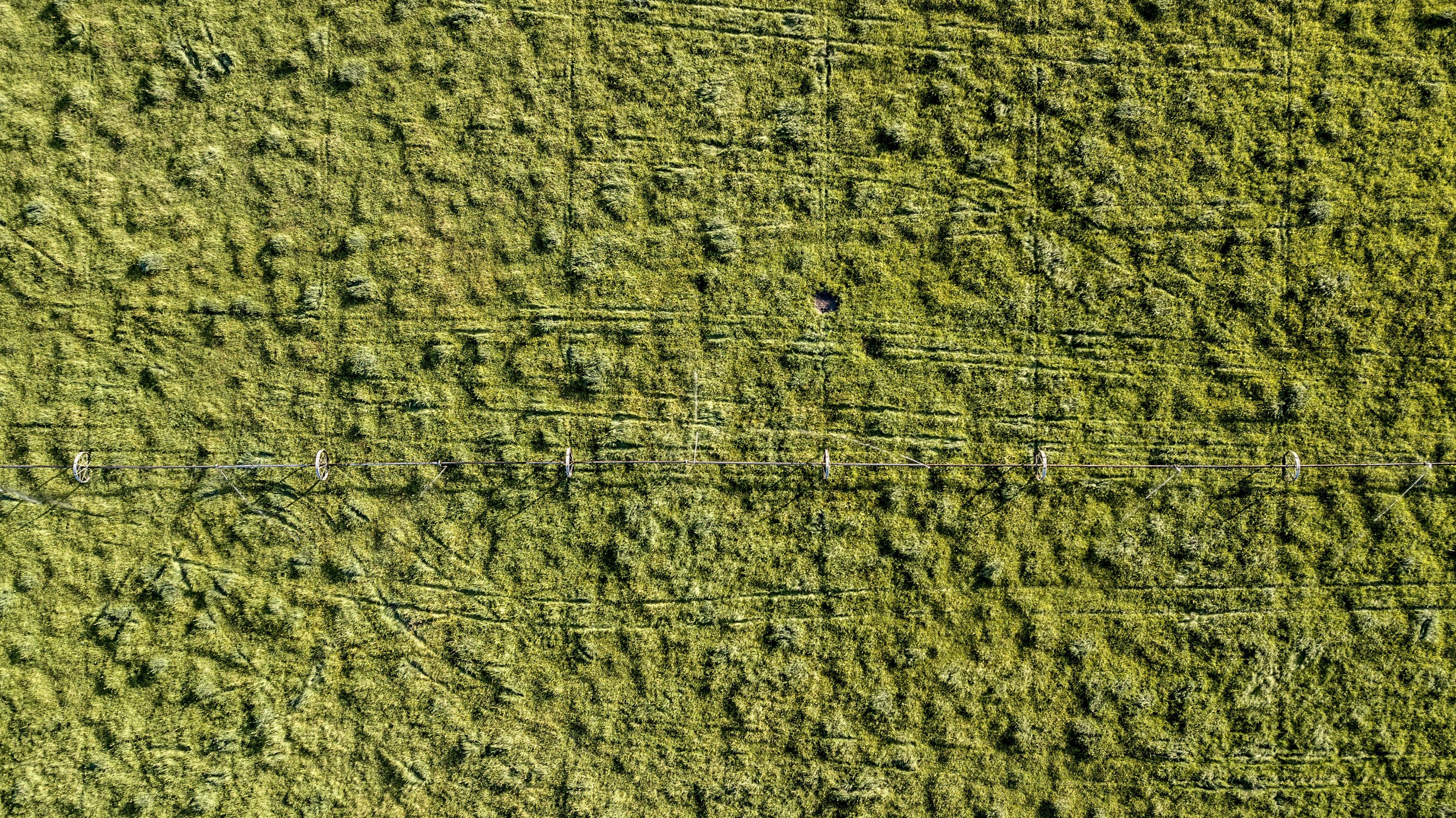 bird's eye view of grass field