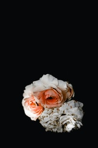 white and pink flower