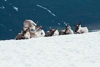 animals on snow field