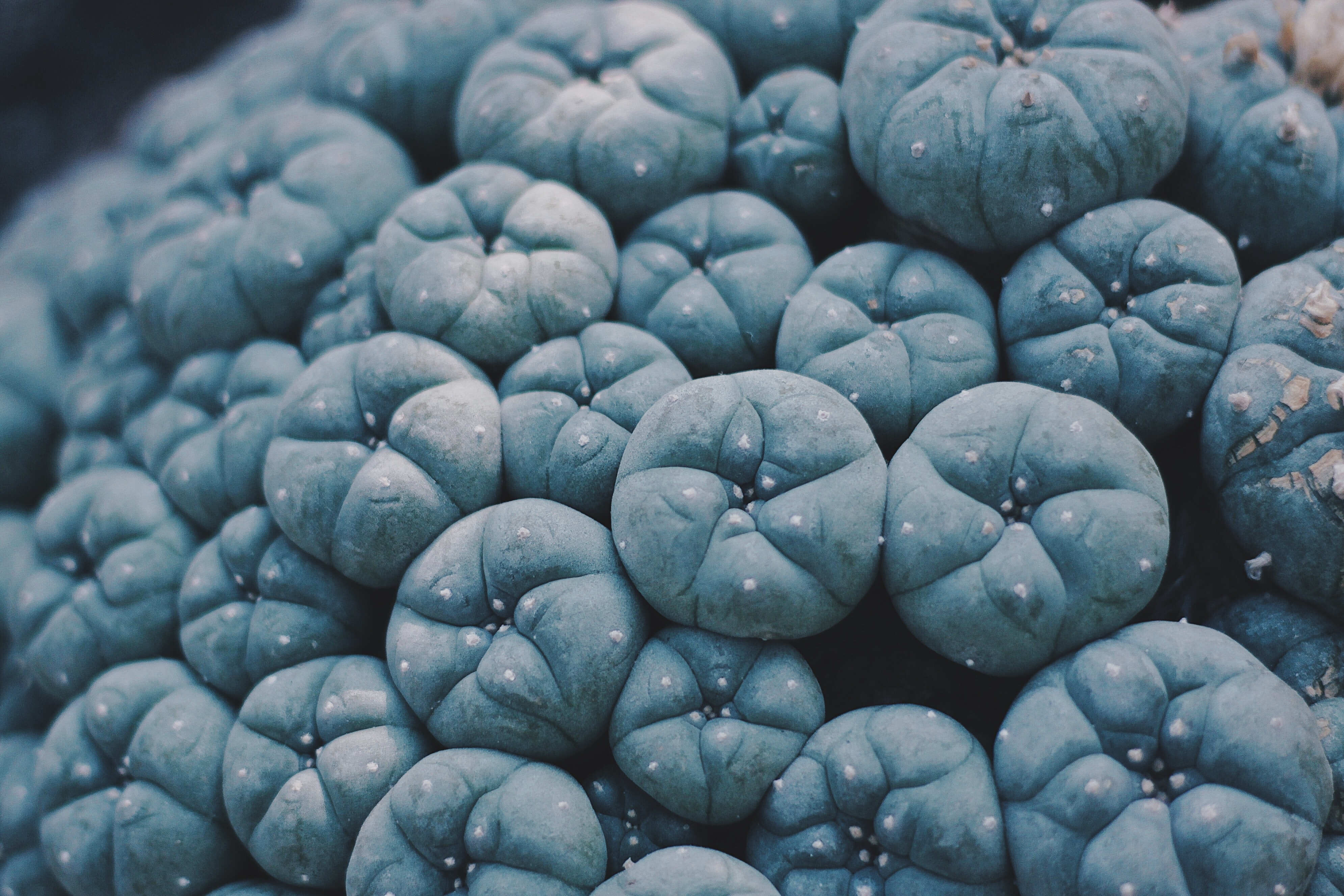 shallow focus photography of blue fruit lot