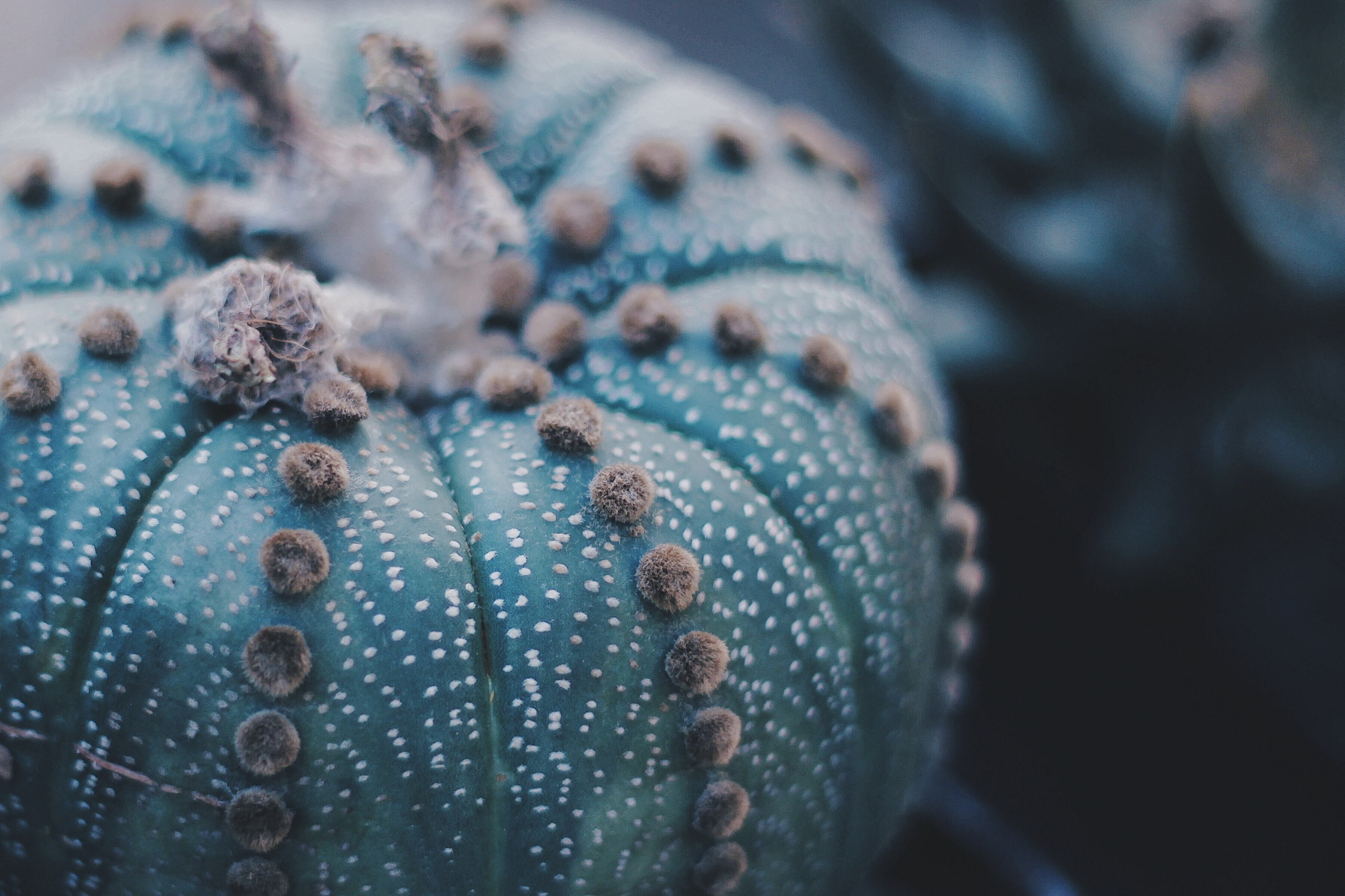 selective focus photography of a cactus