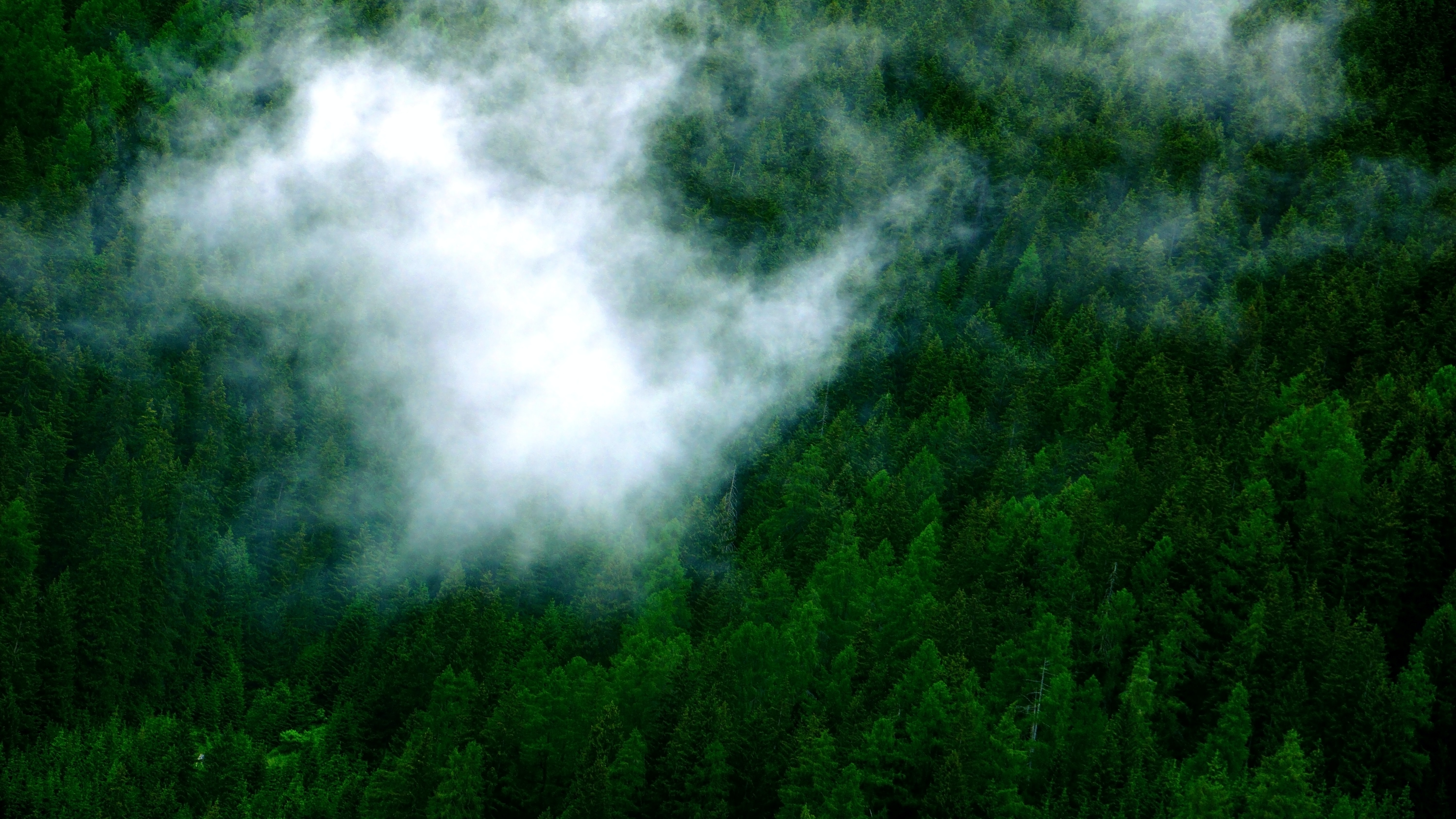 aerial shot of forest covered with fog