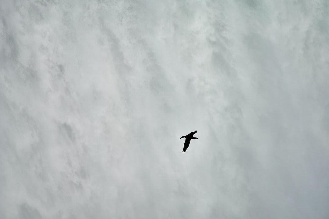 a bird in front of the Niagara fall Canada