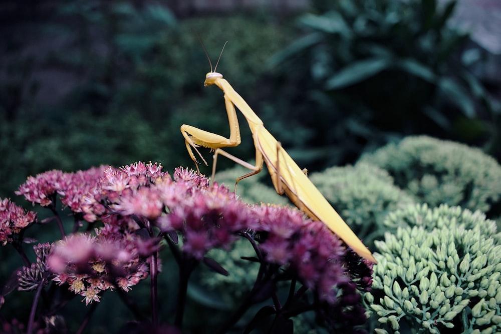 brown praying mantis perched on flower