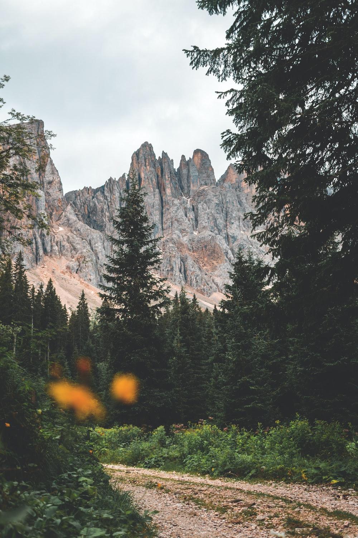 pathway between trees near rocky mountain
