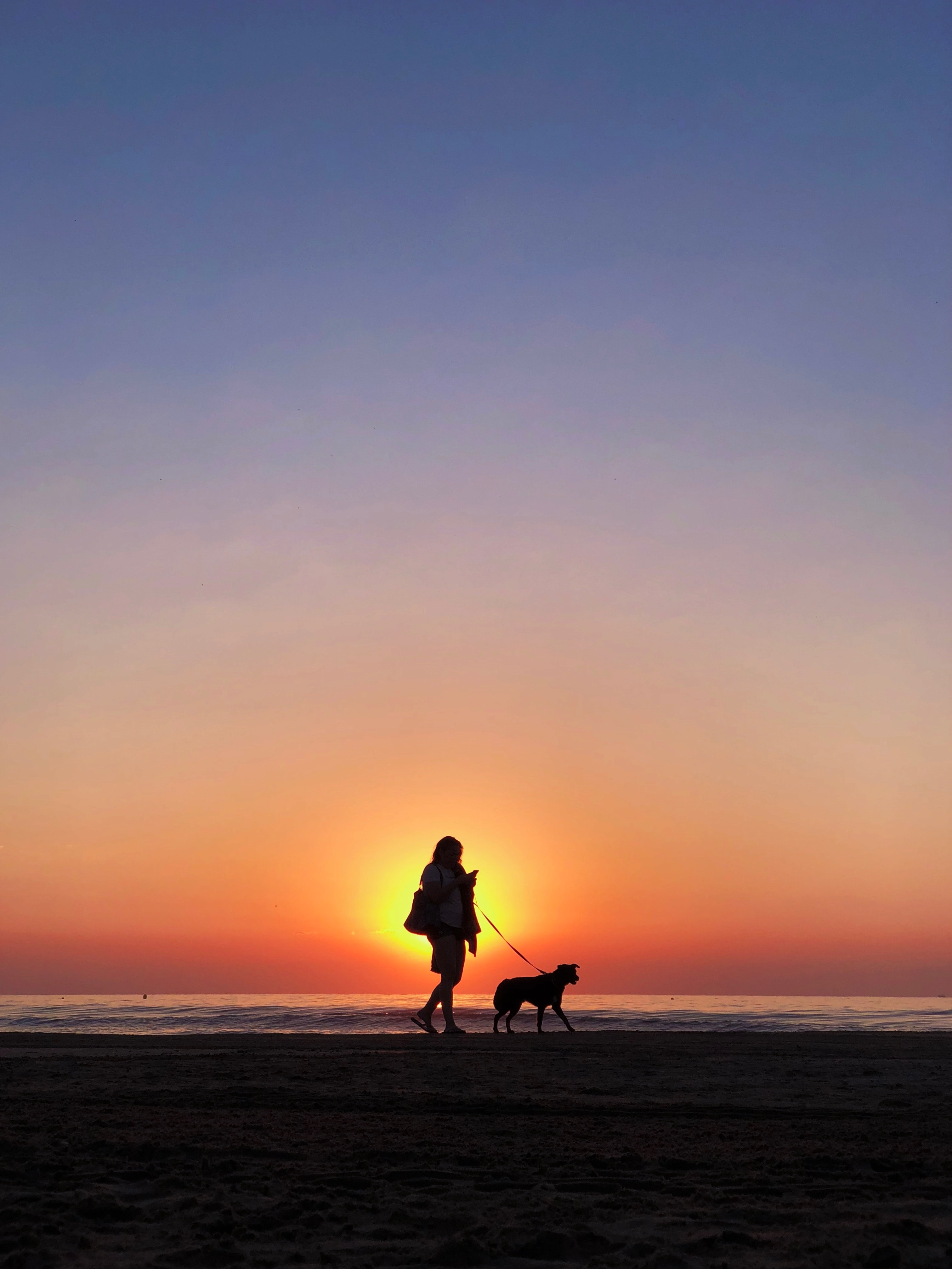 silhouette photography of person holding dog pet leash walking on seashore during golden hour