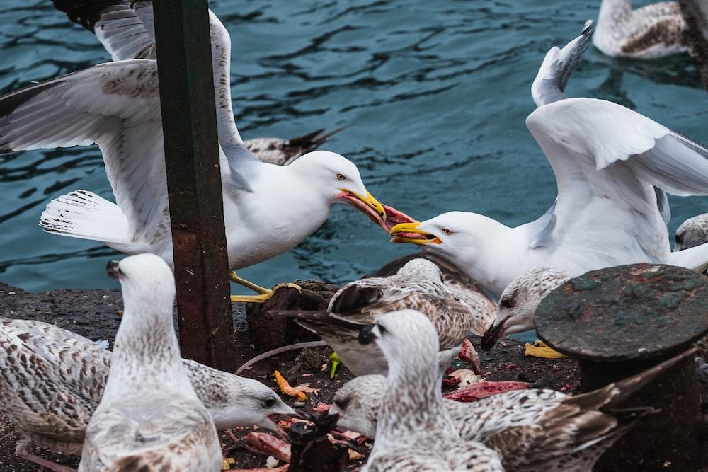 white birds near calm water