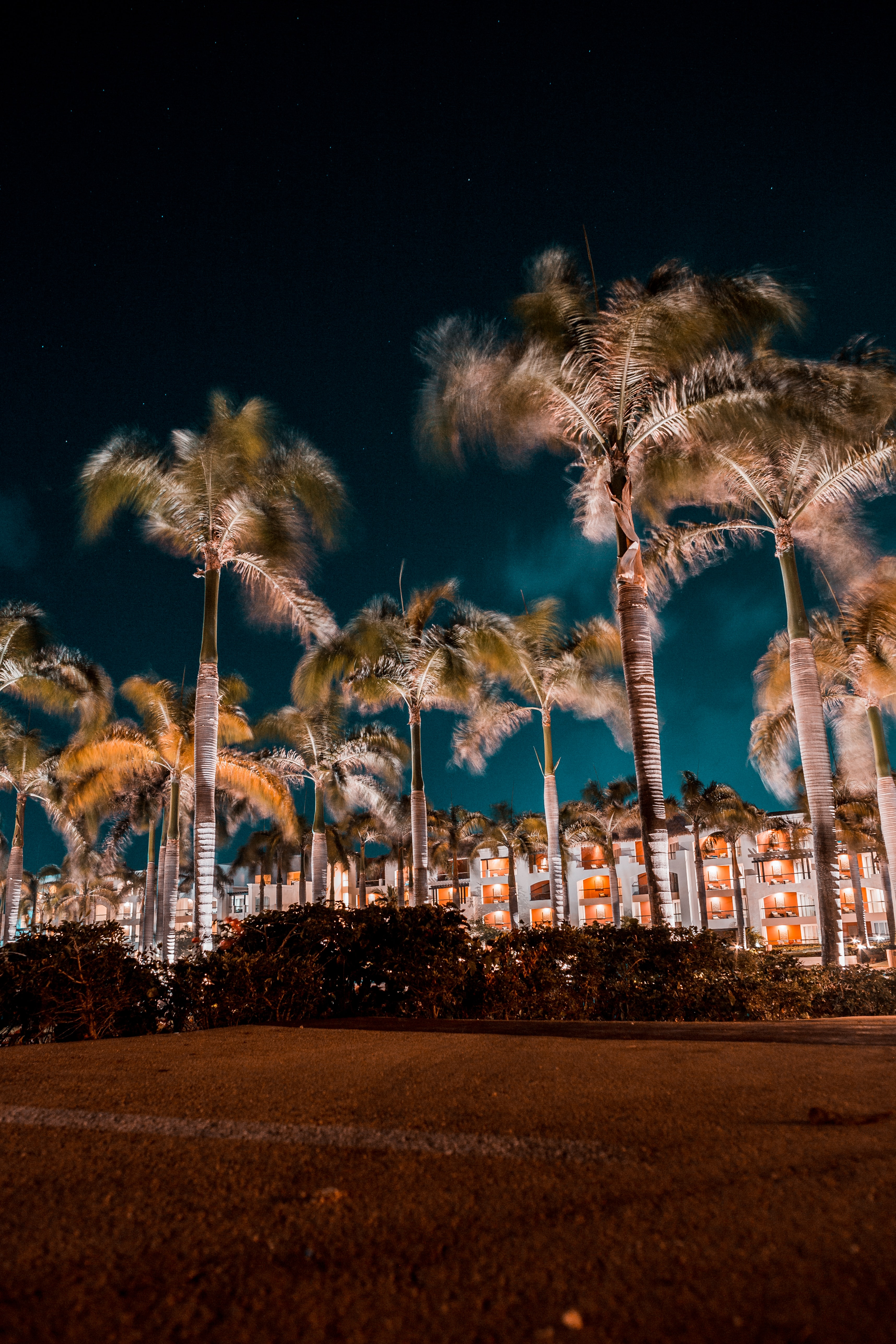 palm trees during nighttime
