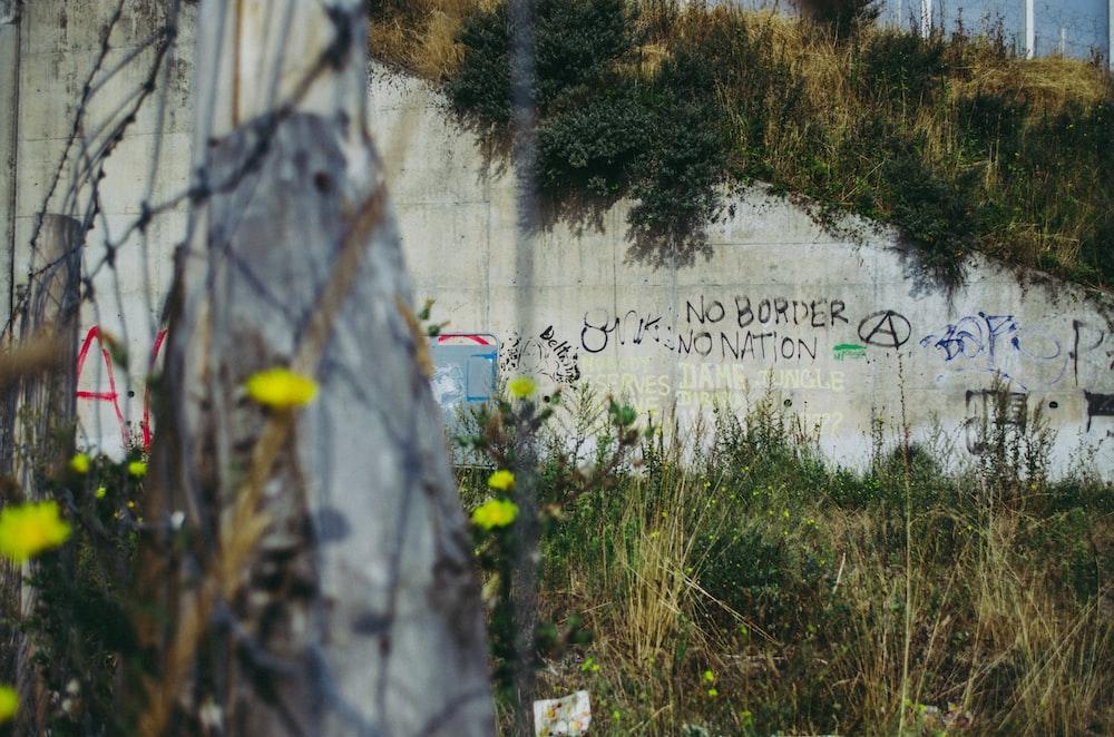 gray concrete wall beside grass