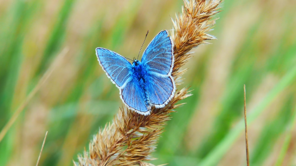 shallow focus photography of blue butterfly