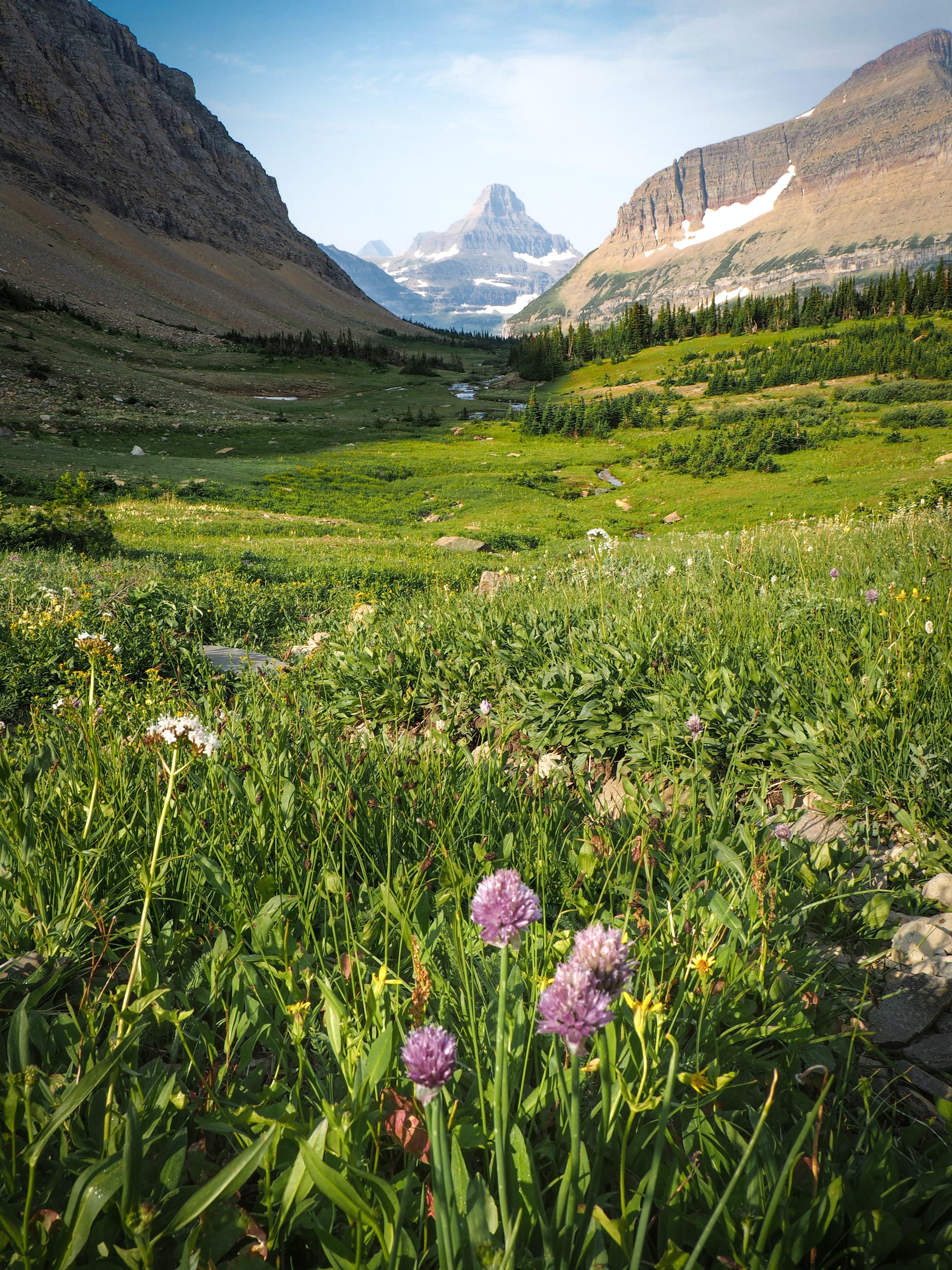 green grass between mountains