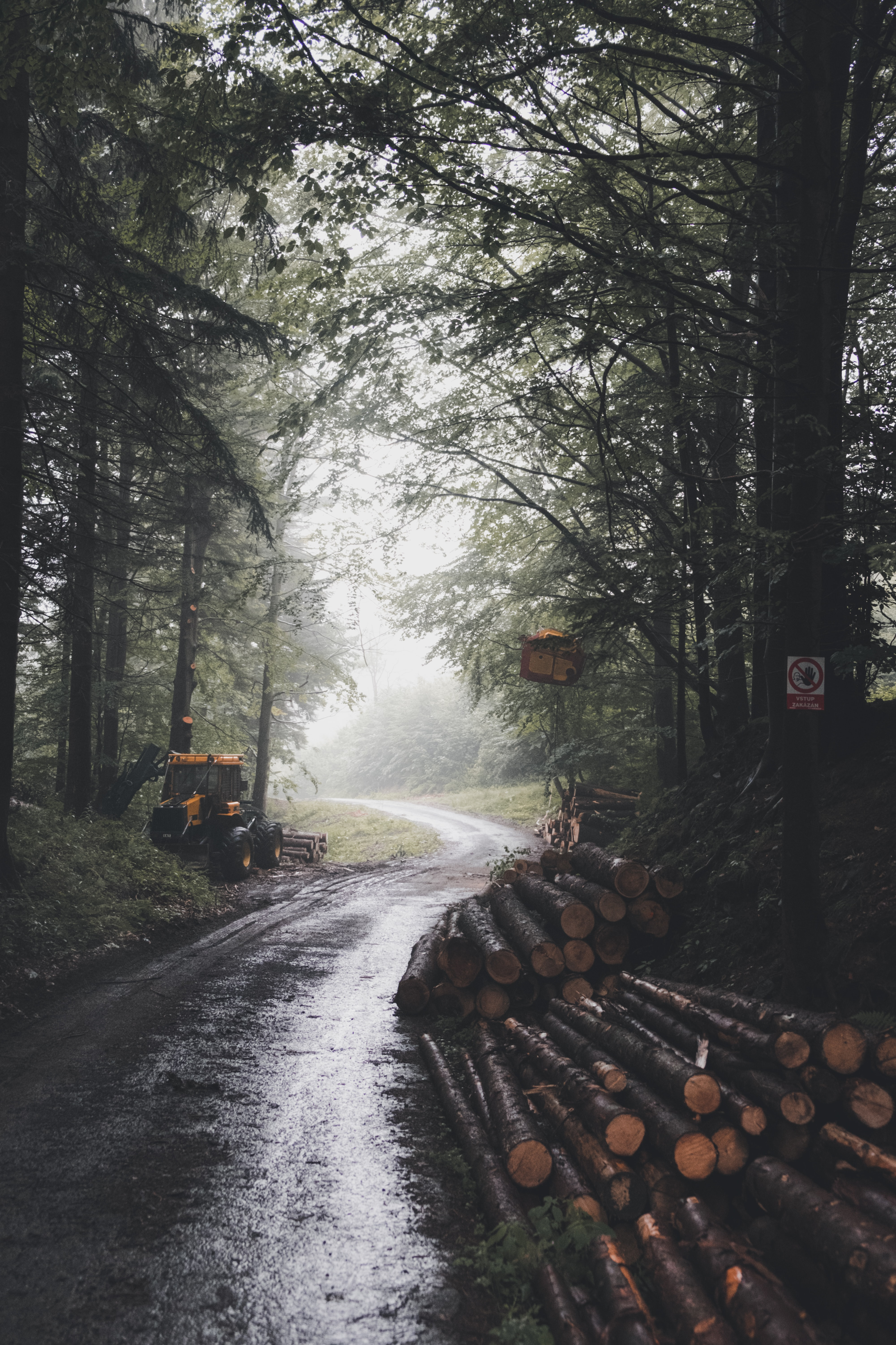 tree logs on road surrounded by trees during daytime