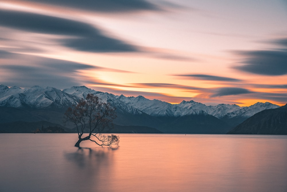 silhouette of tree in body of water