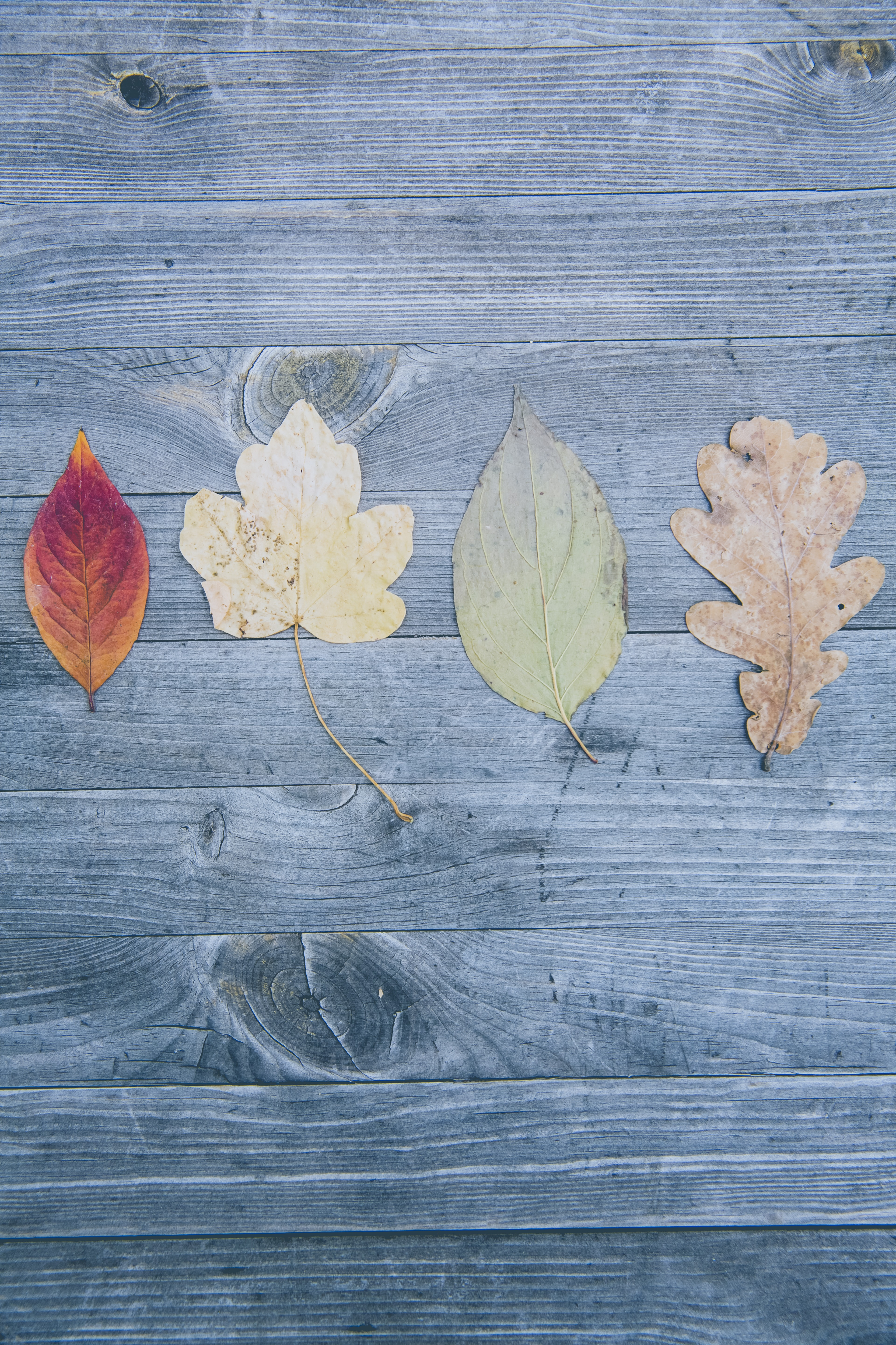 four assorted-shape of leaves